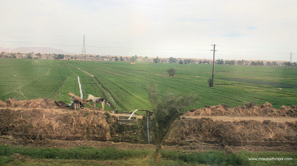 Travel - Africa - Egypt - Luxor - Irrigation System