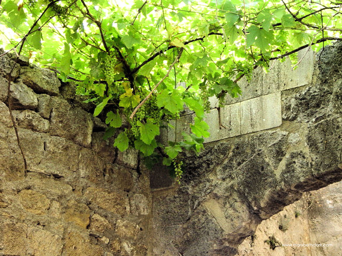 Travel - Greece - Rhodes - Old Town: Hanging Grape Vines